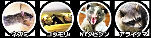 ネズミ、ハクビシン、アライグマ、イタチ